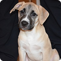 Adopt A Pet :: LEXIE - CHICAGO, IL