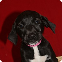 Adopt A Pet :: Waverly - Waldorf, MD