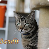 Adopt A Pet :: Bandit - Winter Haven, FL