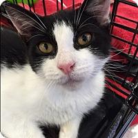 Adopt A Pet :: DaVinci - Levittown, NY
