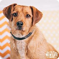 Adopt A Pet :: Cal - Portland, OR