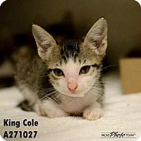 Adopt A Pet :: REMY - Conroe, TX