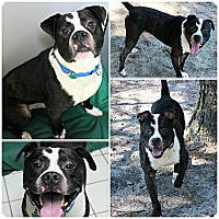Adopt A Pet :: Freddy - Forked River, NJ