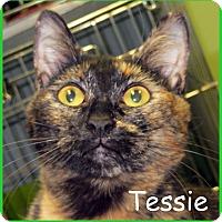 Adopt A Pet :: Tessie - Warren, PA