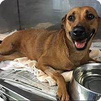 Adopt A Pet :: Layla - Ocoee, FL
