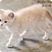 Adopt A Pet :: Puff - Flora, IL