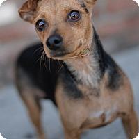 Adopt A Pet :: Fonda - Encino, CA