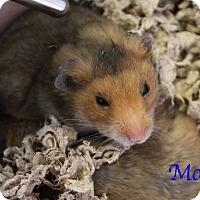 Adopt A Pet :: Mo - Bradenton, FL