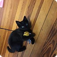 Adopt A Pet :: NJ - Petunia - Blairstown, NJ