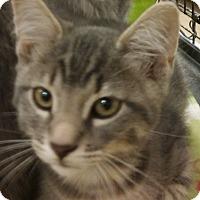 Adopt A Pet :: Bishop - Warrenton, MO