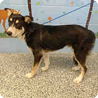 Australian Shepherd Mix Dog for adoption in San Bernardino, California - URGENT ON 10/4  San Bernardino