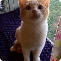 Adopt A Pet :: Gillis - Leander, TX