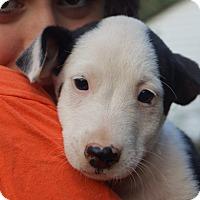 Adopt A Pet :: Blinken - Bayshore, NY