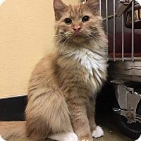 Domestic Longhair Cat for adoption in Irwin, Pennsylvania - Cane