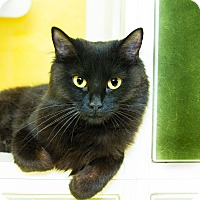 Domestic Mediumhair Cat for adoption in Seville, Ohio - Charm