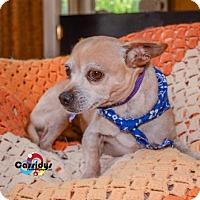 Adopt A Pet :: Jaxson - Matthews, NC