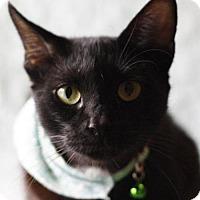 Adopt A Pet :: Jessie - Little Rock, AR