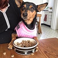 Adopt A Pet :: Victoria - San Francisco, CA