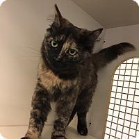 Adopt A Pet :: Toni - San Jose, CA