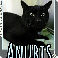 Adopt A Pet :: Anubis - Edwards AFB, CA