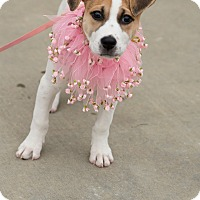 Beagle Mix Dog for adoption in Muldrow, Oklahoma - Bridgette