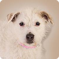 Adopt A Pet :: Milly - Prescott, AZ
