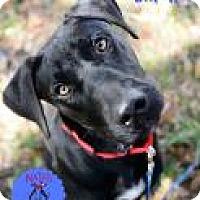 Adopt A Pet :: Smokes - Bradenton, FL