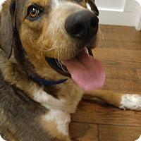 Adopt A Pet :: Axle - Florence, KY