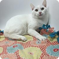 Adopt A Pet :: Gerdie - Addison, IL
