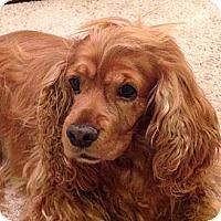 Adopt A Pet :: SKITTLES - Toluca Lake, CA