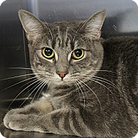 Adopt A Pet :: Mindy 2 - Los Alamitos, CA
