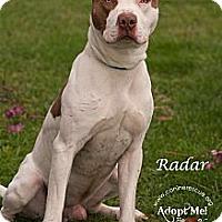 Adopt A Pet :: Radar - Westfield, NY