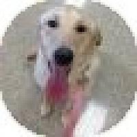 Adopt A Pet :: Jasmine - Denver, CO