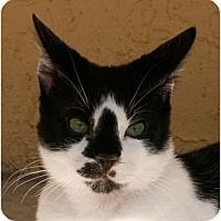 Adopt A Pet :: Emilio - Bonita Springs, FL