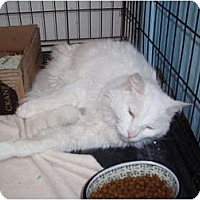 Adopt A Pet :: Stormy - Westfield, MA