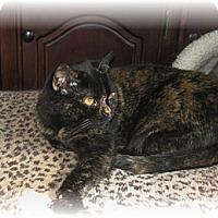 Adopt A Pet :: Gertie - Loveland, CO