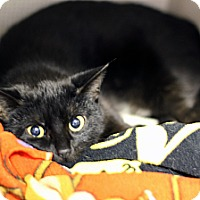 Adopt A Pet :: Pizzazz - Chicago, IL