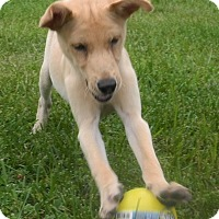 Adopt A Pet :: Sunny and Phoenix - Marlton, NJ