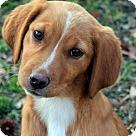 Adopt A Pet :: Rogue T~B