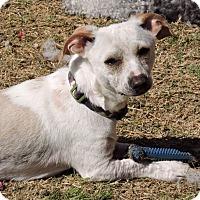 Adopt A Pet :: Nelson - Bedford, TX