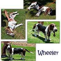 Adopt A Pet :: Wheeler - Marietta, GA