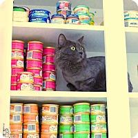 Adopt A Pet :: Carmen - Victor, NY