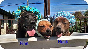 Labrador Retriever Mix Dog for adoption in Harrisonburg, Virginia - Huck and Finn (CNC)