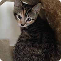 Adopt A Pet :: Marigold - Hamilton, ON