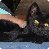 Adopt A Pet :: Big Black - Dallas, TX