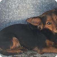 Adopt A Pet :: Meg - San Francisco, CA