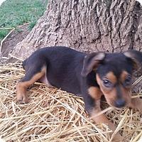 Adopt A Pet :: Cameron - New Oxford, PA