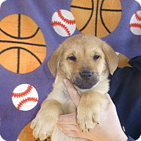 Adopt A Pet :: Noah - Oviedo, FL