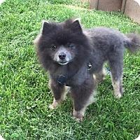 Adopt A Pet :: Hyundai - Waldorf, MD