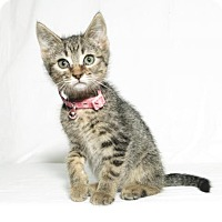 Adopt A Pet :: Alana - Lufkin, TX